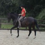 Collected Canter 150x150 Developing the canter pirouette