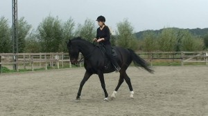 Halfpass 15 300x168 Teaching the exercise to the horse