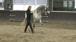 Halfpass 17 300x168 Teaching the exercise to the horse
