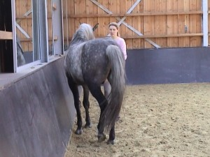 Haunches in 2 300x225 Teaching the exercise to the horse