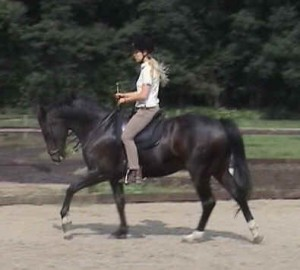 Horse canter 300x270 Flying change: preparation