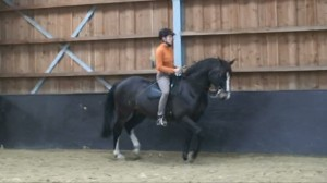 Passage 1 300x168 Teaching the exercise to the horse