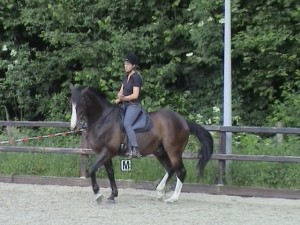 Piaffe 2 300x225 Teaching the exercise to the horse