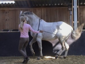 Piaffe 6 300x225 Teaching the exercise to the horse