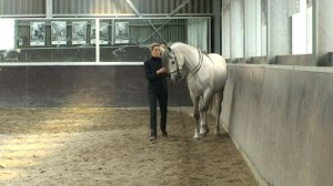 Shoulder in 6 300x168 Shoulder in: Teaching the exercise to the horse