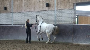 Terre a terre 300x168 Teaching the Terre à Terre to the Horse