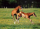 Lente The proper age for training a horse is six, seven or eight