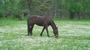 Horse with flowers 300x168 Our own unique flaws!