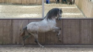 Horse and Mirror2 300x168 Collection