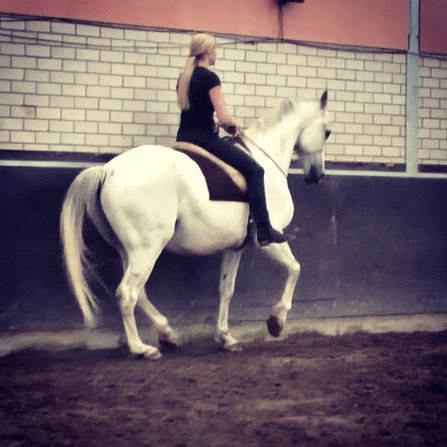 Maestro Piaffe Cordeo riding