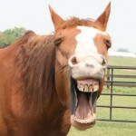 AmyDorland My Horse Yawning 150x150  Winners of the Funny Horse Photo Contest