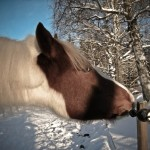 Ann Christine Funny Horse 150x150 Photo Contest: Demolishing the Fence...