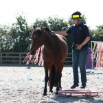 BrendaKent Funny Horse levitation 150x150 Photo Contest: Powers of Levitation