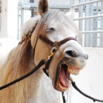 Funny Horse Photo Joking Horse 150x150  Winners of the Funny Horse Photo Contest