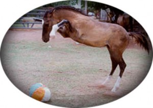 Funny Horse SusanCatt El Guapo 300x213  Winners of the Funny Horse Photo Contest