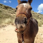Hayley Wedlake funnyhorse Cisco 150x150 Photo Contest: In the dunes...