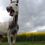 KarinaOlsen Funny Horse Mouth 150x150  Winners of the Funny Horse Photo Contest