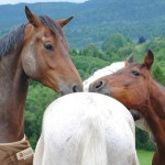 KristinGrov funny horse safety 150x150 Photo Contest: Someone in Between...