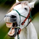 Marilyn Arisco laughing 150x150  Winners of the Funny Horse Photo Contest