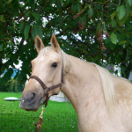 UnniRungstroem funny horse photo 150x150 Photo Contest: Walnut Tree Tastes...