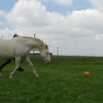 UrsulaFranke Funny Horse Jan soccer 150x150  Winners of the Funny Horse Photo Contest