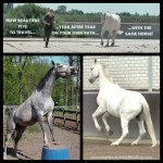 Senior Same Horse 150x150 ()  ()
